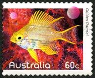 Selo postal dourado do australiano da donzela Fotografia de Stock Royalty Free