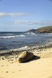 Selo psto em perigo da monge, Oahu Havaí Imagens de Stock