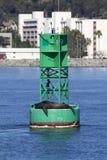 Selo que descansa na bóia do oceano Fotografia de Stock