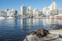 Selo que encontra-se na frente do yacht club em Punta del Este foto de stock royalty free
