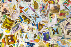 selos Imagem de Stock Royalty Free