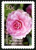 Selos de Camellia Flowering Plant Australian Postage imagens de stock