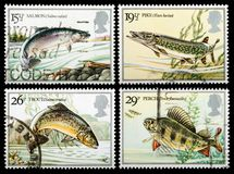 Selos de porte postal britânicos dos peixes do rio Imagens de Stock Royalty Free
