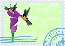 Selos de porte postal com colibris Fotografia de Stock