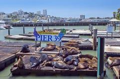 Selos do sono na porta de San Francisco Fotografia de Stock