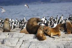 Selos na Antártica fotografia de stock