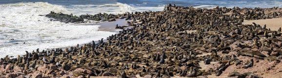 Selos na cruz do cabo em Namíbia fotografia de stock royalty free