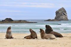 Selos na praia Imagens de Stock Royalty Free