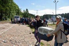 Selos rodeado liberados zoólogos de Ladoga após a reabilitação Imagem de Stock Royalty Free
