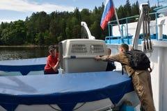 Selos rodeado liberados zoólogos de Ladoga após a reabilitação Fotos de Stock