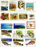 Selos velhos de oceania Fotografia de Stock