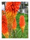 Seltene gesehene Blumen Stockfoto