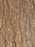 Seltene Vielzahl des braunen Marmors Lizenzfreies Stockfoto