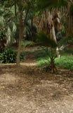 Selva Fotografia de Stock