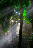Selva Fotografia de Stock Royalty Free
