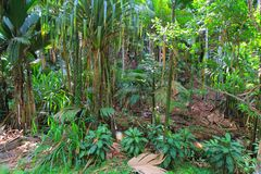 selva Foto de Stock Royalty Free