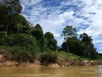 Selva Imagem de Stock