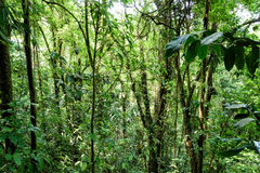 selva Imagenes de archivo