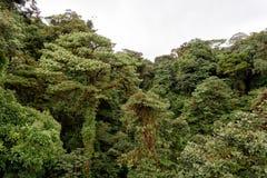 selva Foto de archivo libre de regalías