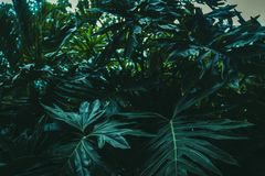 selva Imagens de Stock Royalty Free