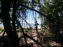 Selva antiga em Bornéu Imagem de Stock Royalty Free