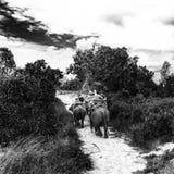 Selva antigua imágenes de archivo libres de regalías