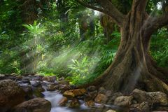 Selva asiática suroriental Fotos de archivo libres de regalías