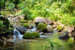Selva brillante con el río Paisaje natural Imágenes de archivo libres de regalías