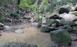 Selva brillante con el río Paisaje natural Imagen de archivo libre de regalías