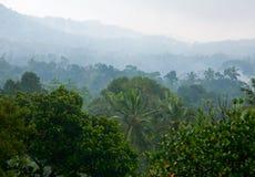 Selva brumosa imagen de archivo