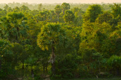 Selva camboyana Imagen de archivo libre de regalías