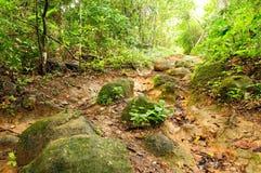 Selva colombiana salvaje de Darien fotografía de archivo