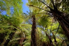 Selva con los helechos gigantes Imagen de archivo libre de regalías