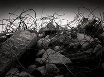 Selva concreta Imagen de archivo