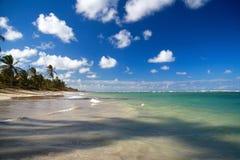Selva da palma na praia Fotografia de Stock Royalty Free