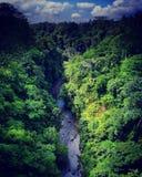 Selva de Bali fotos de stock royalty free
