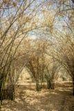 Selva de bambú Fotografía de archivo libre de regalías