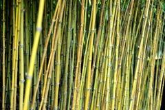 Selva de bambú, Monte, Madeira Fotos de archivo