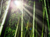 Selva de bambu fotografia de stock
