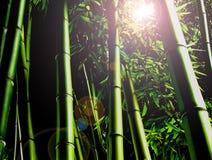 Selva de bambu imagens de stock