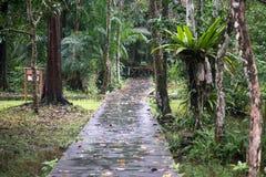 Selva de Bornéu Fotografia de Stock