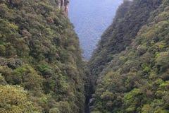 Selva de Brasil imagens de stock