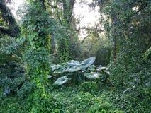Selva de Florida Imagens de Stock