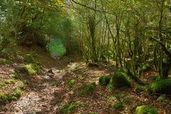 Selva de Irati Fotografering för Bildbyråer