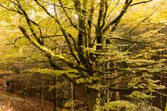 Selva de Irati royalty free stock image