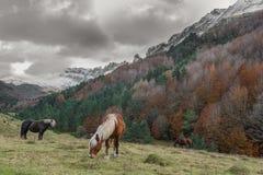 Selva de Irati stock photography