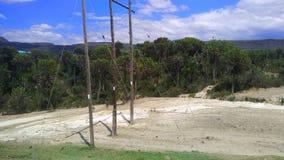 Selva de Kenya imagem de stock