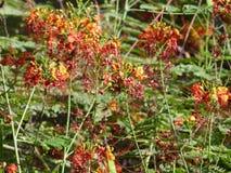 Selva de la flor en un jardín Foto de archivo libre de regalías