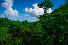 Selva de la montaña en Hawaii Fotos de archivo libres de regalías