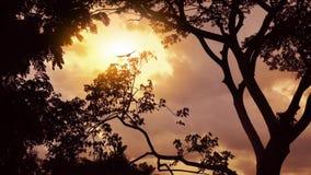 Selva de la puesta del sol con los pájaros que vuelan más allá